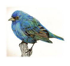 Bluebird Of Happiness | animals - Little Bluebird of Happiness by Judy
