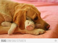 Dog, Cat & a ear flap.