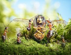 ant-tales-macrophotographie-12