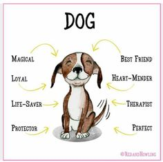 dog lovers -> Avoid trying to force things that your puppy. Should your dog doesn't like a particular treat, let it sit alone. Learn about your dog's various likes and what he doesn't. I Love Dogs, Puppy Love, Pet Dogs, Dogs And Puppies, Doggies, Weiner Dogs, Bulldog Puppies, Crazy Dog Lady, Dog Rules