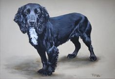 "'Smudge'. Working cocker spaniel by Tania Robinson. Private commission 2012. Acrylic on canvas 16"" x 12"""