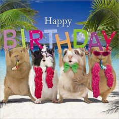 Funny Guinea Pig Birthday Card Birthday Party, Happy Birthday Banner Beach Fun