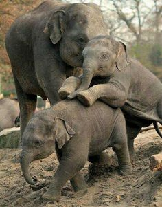 Wildlife Fun