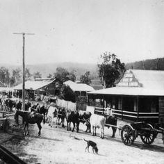 "So it happened that we'll be in Dayboro (""the town of yesteryear"") this long weekend. Any recommendations which places we should visit? [Image: Bullock team and timber jinker in the main street of Dayboro Queensland John Oxley Library State Library of Que"