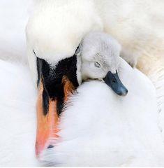 Un des plus beaux oiseaux du monde. Avec lequel une jolie rencontre est possible.