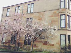 : : scottish sakura + glasgow tenement. : :   © 2014 Misa Kanno-Watson Cityscapes, Glasgow, Cherry Blossom, Landscapes, Painting, Art, Paisajes, Art Background, Scenery