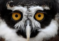 Eyes Wide Open! by Melissa A   Flickr