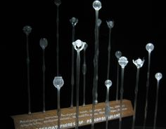 Maria Fernanda Cardoso Museum of Copulatory Organs - Google Search