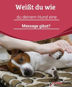 Weißt du wie du deinem Hund eine Massage gibst? Du kannst deinen vierbeinigen Liebling mit einer Massage verwöhnen. Er liebt das und es tut ihm gut.