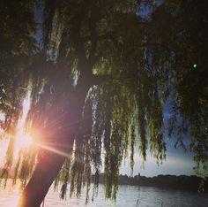 Cea mai lunga zi și cea mai scurta noapte iar Soarele se topește printre valuri printre soapte #sunset #sun #solstice #summer #lake #water #instagood #instagramer #pics #tree #leaf