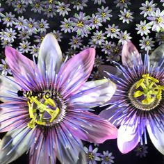 Diumenge 4 d'octubre 2015, Selfriges, LONDON