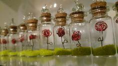 Pòcimes de roses de Sant Jordi. Roses en miniatura.