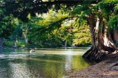 Guadalupe River State Park, a close place to go hiking, horseback riding and get your toes wet.