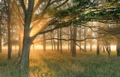Light in the forest by  keller on 500px
