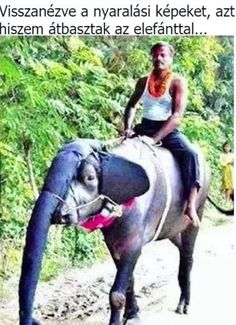 Strange looking elephant // funny pictures - funny photos - funny images - funny pics - funny quotes - lol Funny Shit, Funny Cute, Funny Kids, The Funny, Hilarious Jokes, Funny Stuff, Crazy Funny, Funny Animal Pictures, Funny Photos