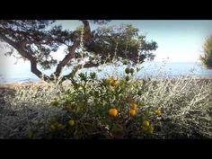 The island of Vir is one of the 300 islands in the Zadar archipelago, that is, one of 1186 islands and islets in the Croatian Adriatic. It lies in Sea of Vir. Croatia Apartments, Krka Waterfalls, Croatian Islands, Stone Road, Historical Monuments, Pine Forest, Mediterranean Homes, Beach Bars, Viria
