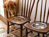 Futterbar für große Hunde