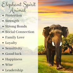 What is the meaning of the Elephant? This animal totem is primarily associated with luck, our self-knowledge, family life, nurturing others and ourselves and tapping into the divine feminine wisdom. Elephant Spirit Animal, Elephant Quotes, Elephant Facts, Elephant Love, Elephant Tattoos, My Spirit Animal, Giraffe, Elephants, Animal Meanings