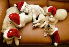we can't get enough of these Christmas pups!