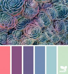 Explore Design Seeds color palettes by collection. Color Palette For Home, Colour Pallette, Color Palate, Colour Schemes, Color Combos, Color Patterns, Paint Combinations, Spring Color Palette, Pantone
