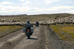 Sheep traffic. Patagonia End of the Earth Motorcycle Adventure with MotoQuest : https://www.motoquest.com/guided-motorcycle-tour.php?patagonia-end-of-earth-motorcycle-tour-30