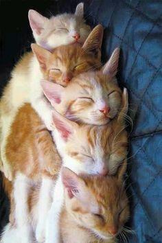 Cute kittens cats