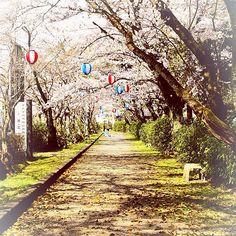 【photo_nana3】さんのInstagramをピンしています。 《. 桜の花が舞い落ちるその景色を いつか僕たちは並んで見ていた  #滋賀 #大宝神社 #春 #backnumber #はなびら #桜 #公園 #美しき滋賀の風景 #写真すきな人と繋がりたい #ファインダー越しの私の世界 #写真で伝えたい私の世界 #backnumber好きな人と繋がりたい #カメラ女子 #一眼レフ #写真部 #お写ん歩 #東京カメラ部 #カメラのキタムラ写真投稿 #team_jp_西 #canon党 #canon70d #canonphotography #coregraphy #ig_japan #phos_japan #japan_daytime_view #naturephoto . . . back numberの「はなびら」の 冒頭部分から引用しました。  大好きなback numberの中でも 特に大好きな曲です。 back numberの曲に合った写真を 撮りたいといつも思う……。 ポトレ……。 . . 写真は2年前、、、 カメラを持ち始めた頃に撮ったものです。…