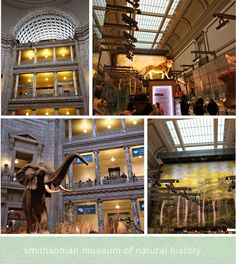 washington, dc: smithsonian museum of natural history