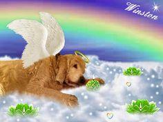 @mariasloughpics & @staratiara doggie #Winston ---> Candlepage: http://www.gratefulness.org/candles/candles.cfm?l=eng&gi=Winst