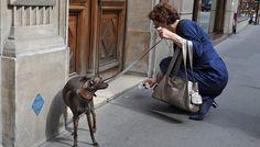 Pooper Scooper, picking up dog poop Aussie Shepherd, Australian Shepherd, Blue Merle, Aussie Dogs, Up Dog, Herding Dogs, Dog Activities, Dog Care Tips, Dog Barking