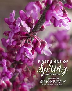 """The submissions have been narrowed down and now it's your turn to vote in our photo contest! Vote for photos that you think display the meaning of,  """"What makes you excited for spring? What do you look forward to when spring comes?"""""""