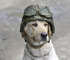 Heroism of U.S. military war dogs evealed in new book #dailymail