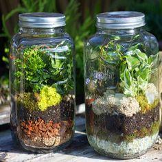 make your own terrarium Yes.