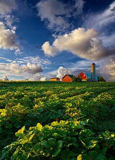 "✿ڿڰۣ(̆̃̃•Aussiegirl  #Country #Living  ""Living Wisconsin""  From the Horizon series by Phil Koch``"