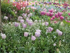 Falar de Monet, do seu jardim e de Giverny é uma alegria para mim, parece que faço uma viagem no tempo, essa sensação ficou ainda mais forte depois que estive lá. No meu ponto de vista, esse é um dos passeios imperdíveis na França.