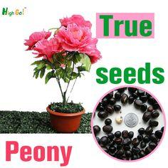Muitas cores raras sementes de flores peônia fontes do jardim, perennial bonsai, plantas evergreen árvore interior
