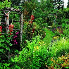 Arbor with red hollyhocks and lavatera