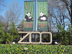 Smithsonian National Zoological Park - aka National Zoo - Washington, D.C. - the pandas are always a treat to watch...