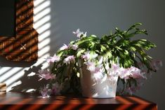 17 Beautiful Houseplants Safe For Cats (With Pictures) – Smart Garden Guide | 1000 - Modern#beautiful #cats #garden #guide #houseplants #modern #pictures #safe #smart Houseplants Safe For Cats, Best Air Purifying Plants, Zebra Plant, Easy Care Plants, Iron Plant, Smart Garden, Jade Plants, Best Indoor Plants, House Plant Care