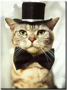 cat in top hat and bow tie