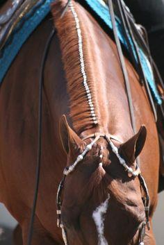 Western pleasure at the Scottsdale Classic- beautifully banded mane! Horse Mane, My Horse, Horse Tips, All The Pretty Horses, Beautiful Horses, American Quarter Horse, Quarter Horses, Aqha Western Pleasure, Horse Braiding