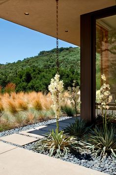 14 Modern Homes That Use Rain Chains To Divert Water // Flowers have intertwined with this rain chain and turned it into an even more unique design element on the side of this home.