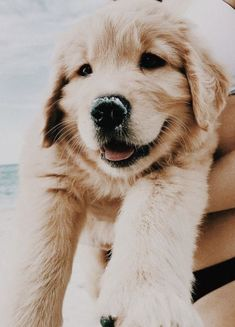 5 cutest smiling puppy faces you have ever seen creatures