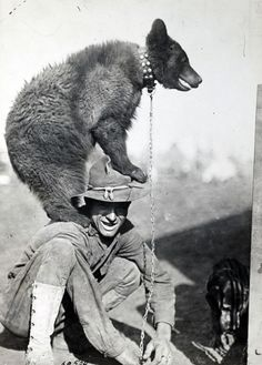 A bear mascot climbs up on the shoulders of a soldier.- The Animal Soldiers of World War I