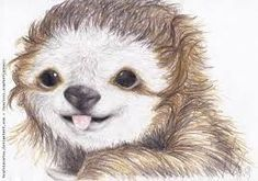 cute sloth drawings - Google Search