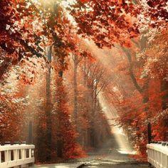 Inspiring fall
