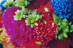 photo / flowers   Mika Ninagawa Official Site