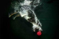 Cani sott'acqua   Trip For Dog