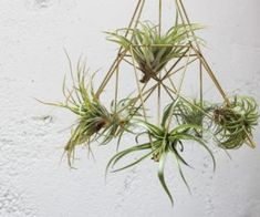 Air plants are easy to care for, don't require soil, and can become a great addition to any low maintenance household. This DIY geometric planter looks elegant and simple hanging in clusters, and is … Diy Planters, Homemade Modern, Geometric Planter, Polished Concrete, Trending Decor, Air Plants, Driftwood Decor, Storage Solutions Diy, Hanging Garden