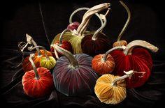 Velvet Pumpkins by Hot Skwash